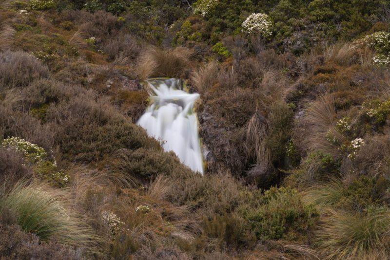 Ein kleiner Wasserfall bannt sich seinen Weg durch das üppige Grün