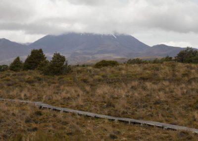 Ein freier Blick vom Moor aus auf den Tongariro National Park.