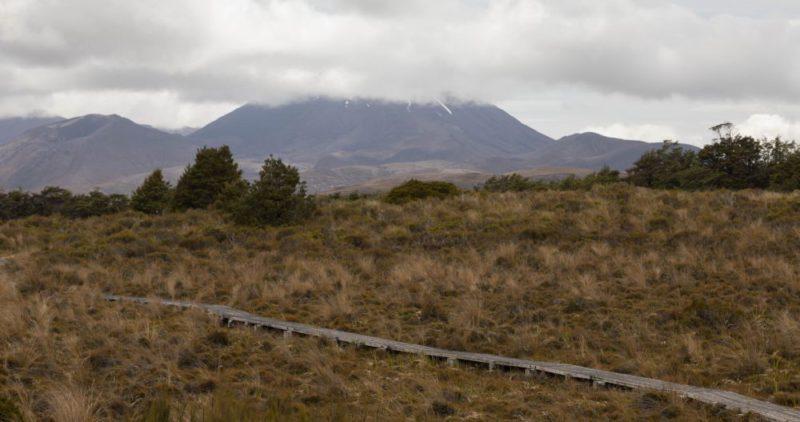 Der Blick vom Moor auf den Tongariro National Park