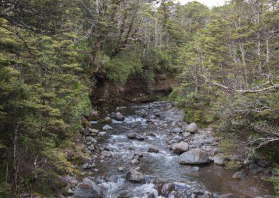 Der Taranaki Wasserfall wird zum flotten Fluss und rauscht durch den Wald.