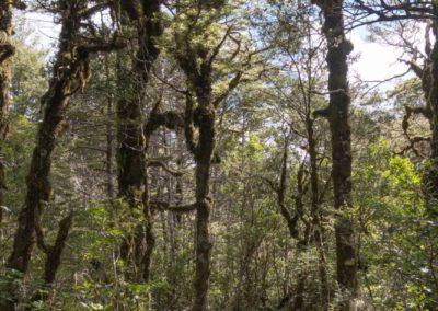 Langsam endet die Wanderung - nach dem Wasserfall schlendert man gemütlich durch den Wald, bis das man am Ausgangspunkt wieder ankommt.