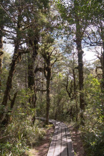 Ein schöner Wald beendet die Wanderung