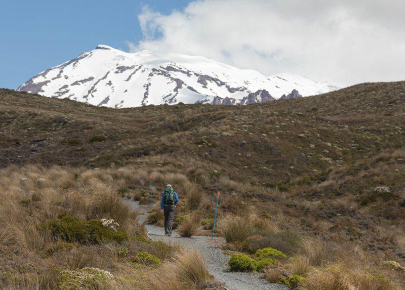 Von einem Wanderweg aus kann man den schneebedeckten Vulkan Mount Ruapehu sehen