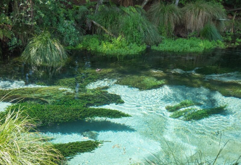 Hamurana Springs, glasklares Wasser