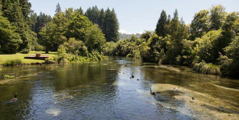 Hamurana Springs - am Lake Rotorua