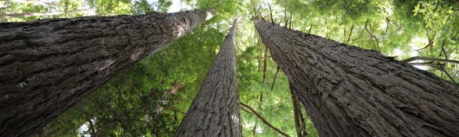 Trees that Count – das neuseeländische Mammutprojekt